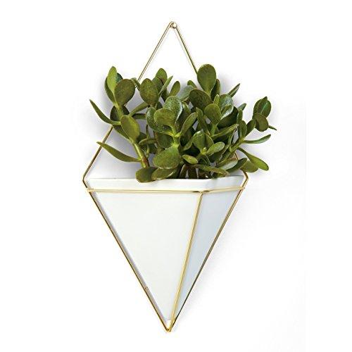 Umbra Trigg Wandvase Geometrische Deko – Übertopf Für Zimmerpflanzen Sukkulenten Luftpflanzen Kakteen Kunstpflanzen und Mehr Beton  Metall Grau  Kupfer 2-er Set