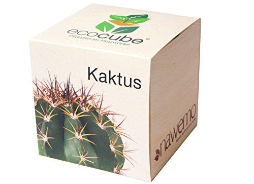 Ecocube Kaktus im Holzwürfel