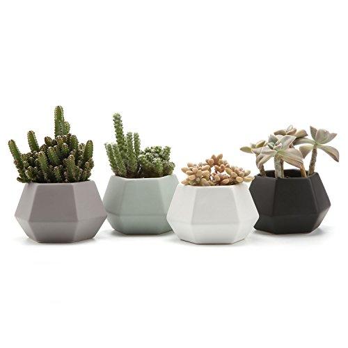 T4U Hexagonale Keramik Sukkulenten Töpfe Kaktus Pflanze Töpfe Mini Blumentöpfe Matt 4 Stücke Set