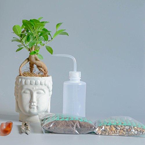 Bonsai Baum Zen Garden Kit Ginseng Ficus Feige handgefertigt Beton Buddha Kopf Übertopf Terrarium Pflanze Geschenk Ideen - Bonsai with Tools
