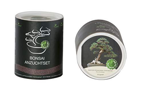 Seedeo Bonsai Geschenk - Set Japanische Schwarzkiefer Pinus thunbergii