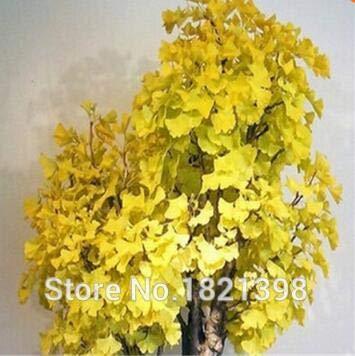 Go Garden Frühling Bonsai Ginkgo Samen 20 Stücke 10 Arten Mix Blumensamen Novel Blühende Pflanze Für Hofgarten 8