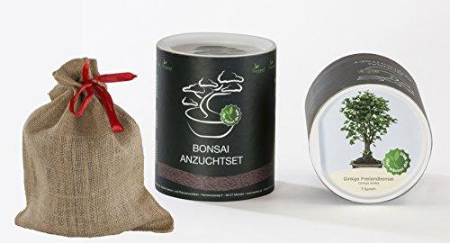 Seedeo Bonsai Geschenk - Set Ginkgo Ginkgo biloba
