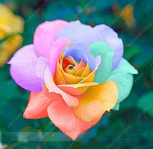 100pcs 20 Arten von Rosen-Samen Black Rose So Charming Bonsai Blumensamen seltene Stauden Blumen Anlage für Hausgarten-Rot