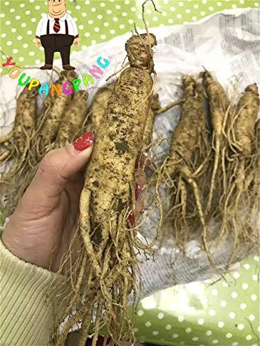 Shopmeeko 30 stücke Ginseng pflanzen von Changbai Berg Ginseng Bonsai pflanzen Pflanzen DIY Seltene Pflanzen Hausgarten Kostenloser Versand