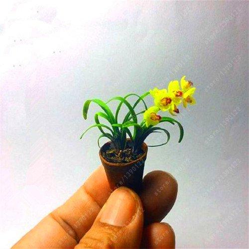 100 PC  bag seltene Mini Orchideensamen Phalaenopsisorchidee Indoor Miniatur-Garten Bonsai Blumensamen Topfhausgarten Pflanze Orchidee 6