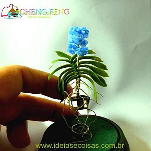 Shopmeeko 100 Pcs Mini Bonsai Orchidee DEA Bonsai Innen Haus Miniaturpflanzen Blumen Blumenkübel Bonsai Garten Pflanze Heimwerkerpflanze Sementes 2016 Blumen asiatisch GIF