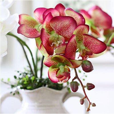 200pcsbag Phalaenopsis-Orchideen-Samen Bonsai Blumensamen Indoor Ältere Zier Orchideen-Garten Pflanzen für Blumentopf 16