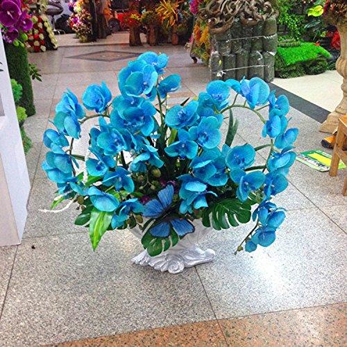 Seltene Orchideen Bonsai Balkon Blumen-blaue Schmetterlings-Orchidee Samen Schöner Garten Phalaenopsis-Orchideen-Samen -200 PCS