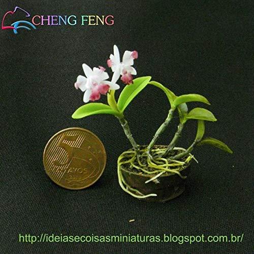Shopmeeko 100 Teilebeutel Seltene Miniatur Blau Orchidee pflanzen Phalaenopsis Schwarze Orchidee Indoor Garten Bonsai blume pflanzen Orchidee Pot Home Garde Violett