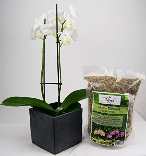 Moos für Pflanzen wie Sphagnum für Orchideen Bonsai Anzucht PREMIUM Pila Moss 125g