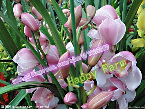 100 Stück gemischt chinesischen Cymbidium-Orchidee Samen Bonsai Blumensamen für Hausgarten