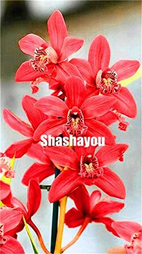 Bloom Green Co 100 PCBeutel Cymbidium Bonsai Orchideen Cymbidium Pflanze Bonsai Blume Bonsai Natürliches Wachstum DIY Anlage für Hausgarten-reinigt die Luft 10