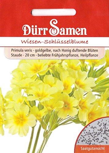 Wiesen-Schlüsselblume Primula veris ca 80 Samen