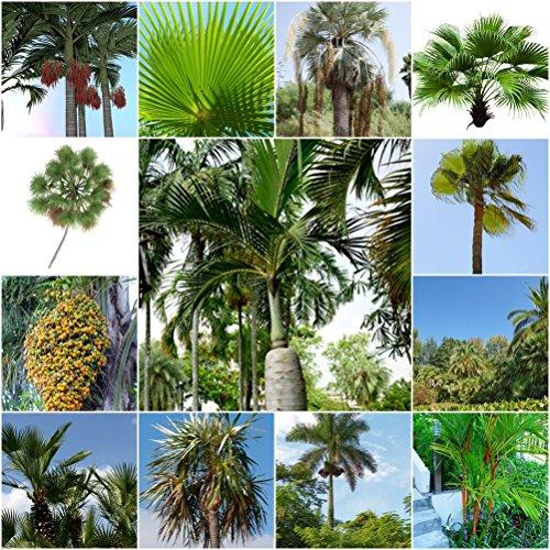 Palmen Mix - 11 Palmen Arten - je 10 Samen -sortenrein verpackt
