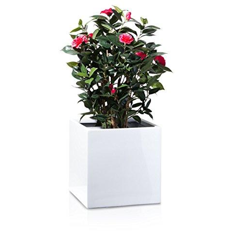 Pflanzkübel Blumenkübel CUBO 40F Fiberglas 40x40x40 cm weiß hochglanz