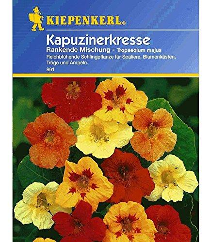 Rankender Kapuzinerkresse-Mix 1 Tüte Samen
