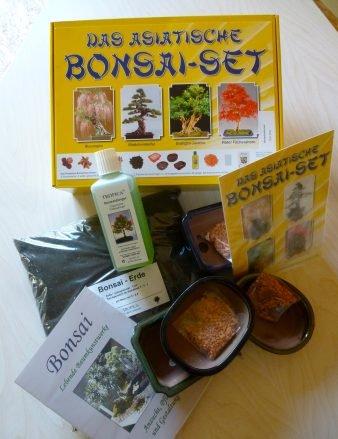 Tropica - Set - Bonsai Asiatisch - Samen von Blauregen Mädchenkiefer O-Jasmin R Fächerahorn