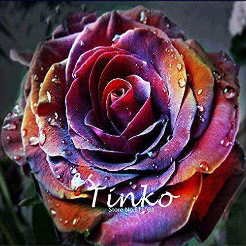 200pcs Rose Samen Seltene Blumensamen Garten Balkon Terrasse Knappe Bonsai Topfpflanzen Seltene Rosen-Samen