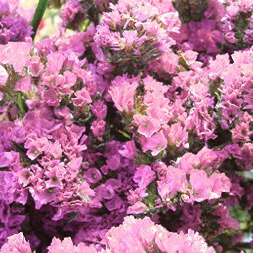 Keland Garten- 'Im Namen von Liebe' 10 Vergissmeinnicht Blumensamen Blumenmeer winterhart in Ihrem GartenBalkonTerasse rosa