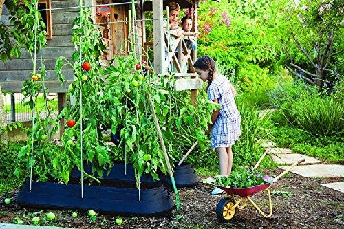 Koll Living Rankhilfe für Kletterpflanzen - jetzt einfach eigenes Gemüse Kräuter oder Blumen auf dem Balkon der Terrasse oder im Garten züchten