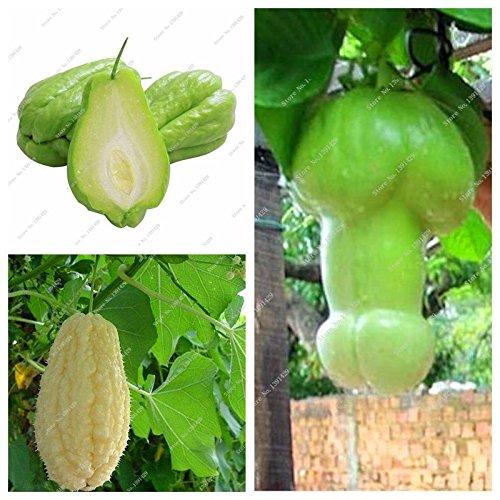 Outdoor Plants Garten Zierkürbis Chayote Samen Bonsai Topfpflanze Grün Obst Gemüse-Samen Hoch Ernährung 10 Stück