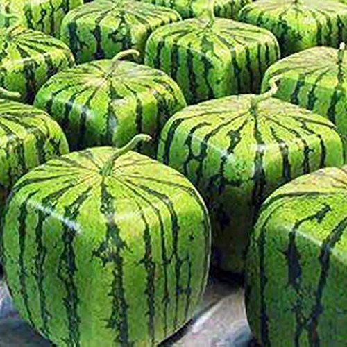 50 Stück Samen Seltene Einfache Wassermelonen Samen Obst Wasser-Melone-Samen-Hausgarten